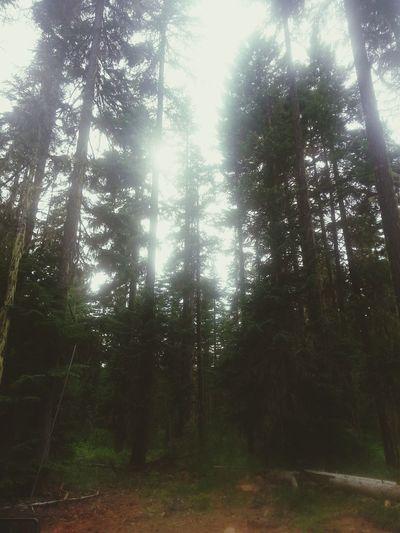 AWalkInTheWoods The Wilderness EyeEm Nature Lover Home Sweet Home