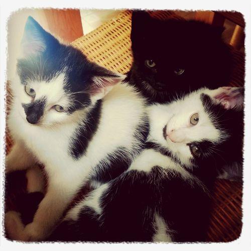 Cuddlin Kittens