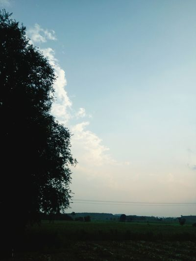 Tree Landscape Tranquil Scene Sky Tranquility Scenics Field Beauty In Nature Cloud Growth Nature Fence Non-urban Scene Day Cloud - Sky Blue Outdoors Solitude Remote Horizon Over Land