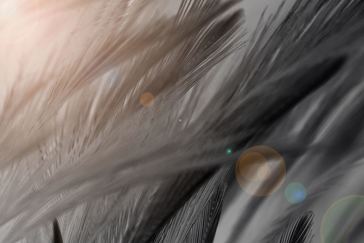 Hair Close-up No People Softness Selective Focus Feather  Indoors  Still Life Full Frame Focus On Foreground Animal Hair Animal Themes White Color Animal Hairstyle Blurred Motion Body Care Day Vulnerability  Hair Color