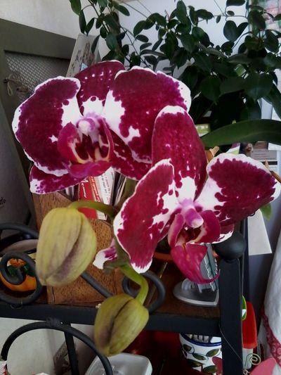 mes fleurs a la maison Bananier Guadeloupe Sucre Et Piments Guadelpupe Fleurs De Guadeloupe Métro Parisien Musée D'Orsay On A Date Working Hi! Canelle Madras Hello World That's Me Sleeping