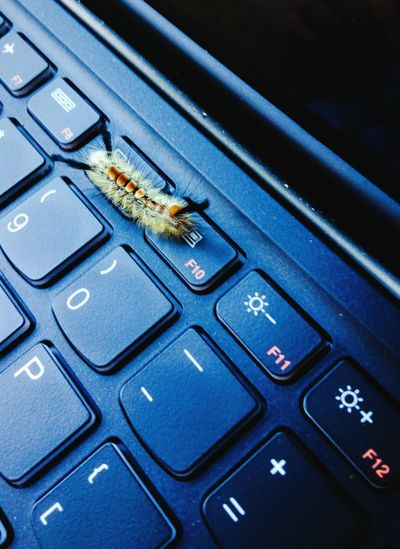 Critters of the 21st Century Caterpillarlife Nature On Your Doorstep Nature On Your Laptop Laptop Keyboard Nature Meets Urban Nature Meets Modern Life Nature Meets Civilization Naturemeetsurban Caterpillar Critter Love Caterpillars  Fuzzy Little Creature :) Fuzzy Caterpillar Cute Caterpillar Laptop Computer Keyboard Computer Keyboard Close Up Nature And Technology Nature And Manmade Modern Nature Technology And Nature California Going For A Walk Caterpillar Life