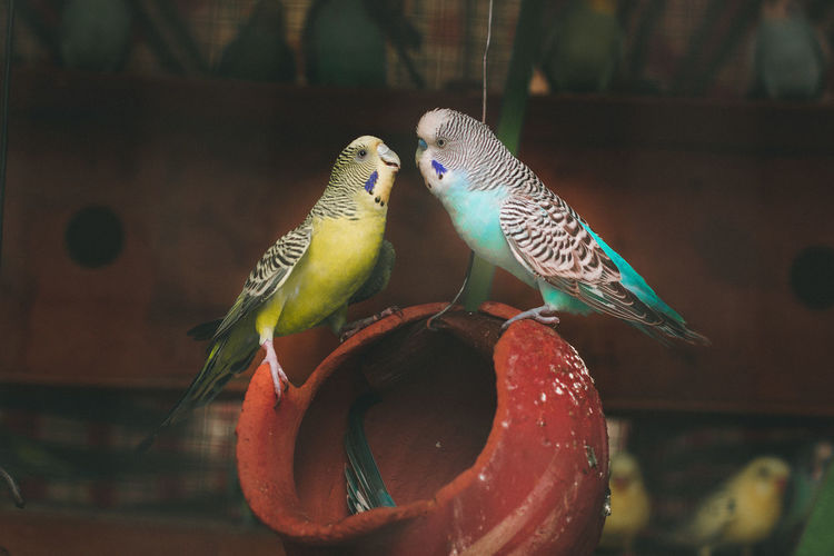 Close-up of two birds perching