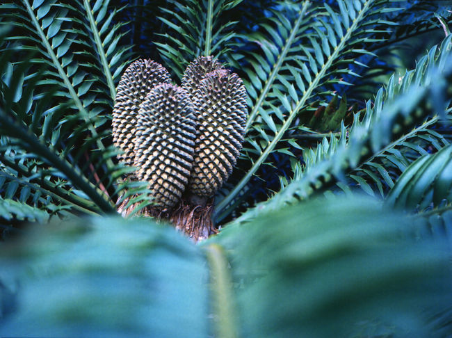 Pattern, texture, shape and form Pattern, Texture, Shape And Form Backgrounds Beauty In Nature Close-up Day Focus On Background Fragility Full Frame Green Color Growth Leaf Natural Pattern Nature No People Outdoors Pattern Plant Plant Part Selective Focus Tranquility Tree