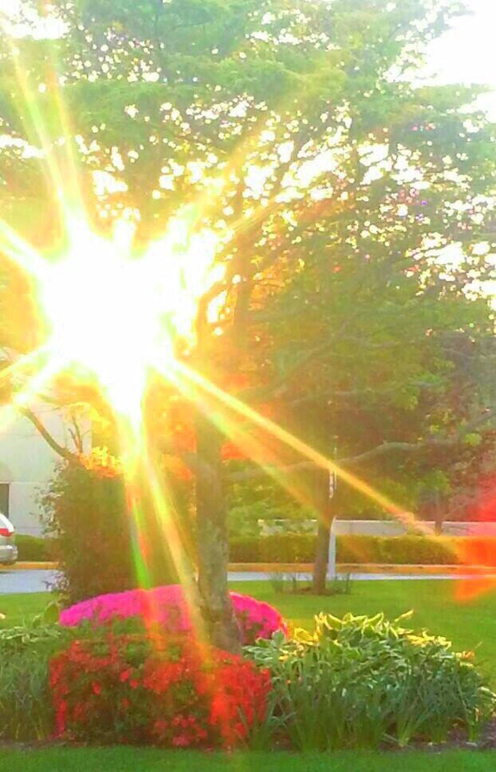 sunbeam, grass, sunlight, lens flare, nature, tree, growth, outdoors, sun, lawn, no people, flower, day, beauty in nature, plant, tranquility, scenics, flowerbed, building exterior, freshness, sky