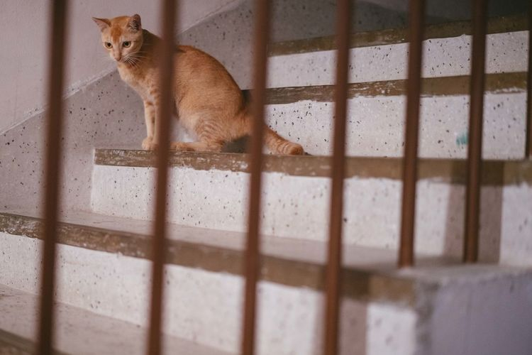 Cat Sitting On Steps Seen Through Railing