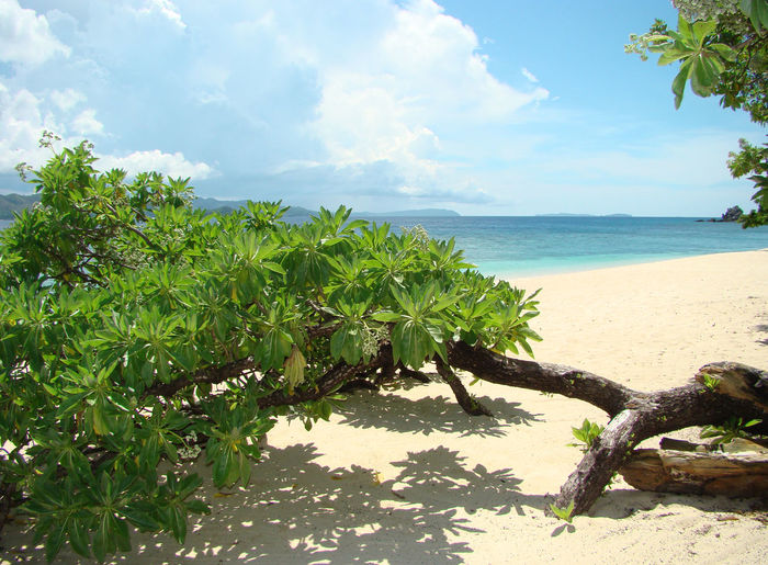 Caron Philippines Caron Beach Beauty In Nature Day Growth Horizon Over Water Nature No People Outdoors Palawan Philippines Plant Sand Scenics Sea Sky Tranquil Scene Tranquility Tree Water