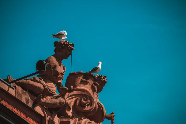 Animal Themes Animal Wildlife Architecture Birds Built Structure Hameln History Outdoors Seagull