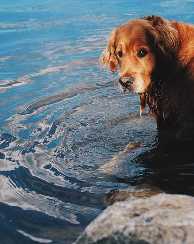 Dog Pets Water One Animal Domestic Animals Wet Animal Themes Outdoors Mammal Waterfront Day Lake Nature No People Close-up Fujifilm_xseries Nature See The Light