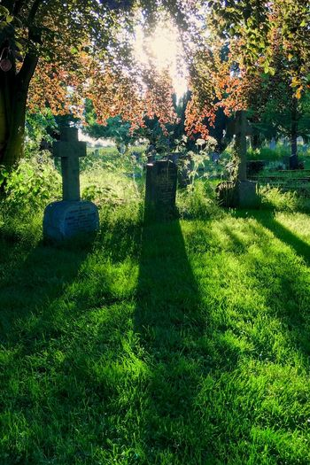 Beautiful peace Gravestone Back Lit Memorial Cemetery Plant Grass Shadow Sunlight Nature Green Color Park Outdoors