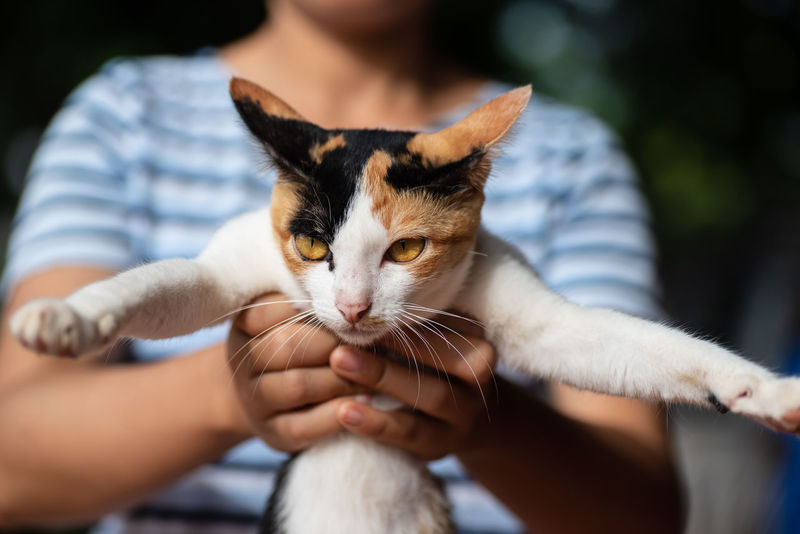 Playing with cat Care Cat Cute Cats Domestic Domestic Animals Domestic Cat Feline Focus On Foreground Hand Human Body Part Human Hand Kitten Mammal Midsection One Animal Pet Owner Pets Playful Tricolor Cat Whisker Young Animal