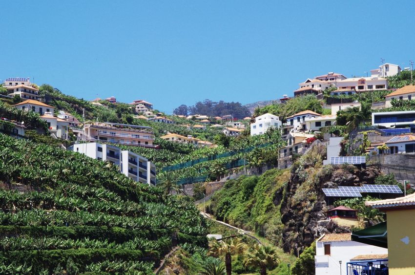 Looking uphill in ponta do sol Architecture Banana Banana Tree Building Exterior Built Structure City Cityscape Clear Sky Day Holiday Houses Madeira Nature No People Outdoors Ponta Do Sol Portugal Portugese Residential Building Residential Structure Sky Steep Terraces Tree Valley