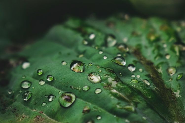 drops of dew on