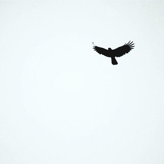 Flyfree Flying High Flyaway Bird Photography My Best Photo 2015 Enjoying Life Morningcapture