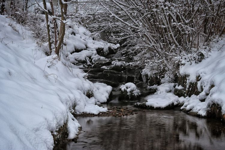 Snow covered stream amidst trees during winter