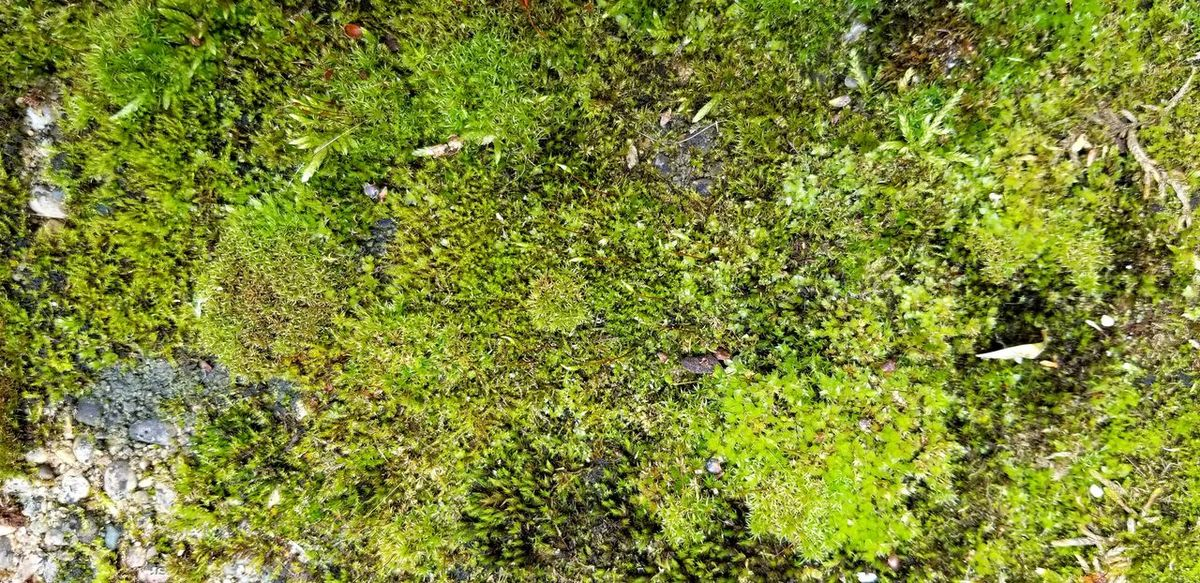 moss on wall Moss Moss Close Up Moss & Lichen Moss-covered Backgrounds Full Frame High Angle View Sunlight Field Green Color Plant Close-up Green Countryside Greenery Flora Vegetation Spring Lush
