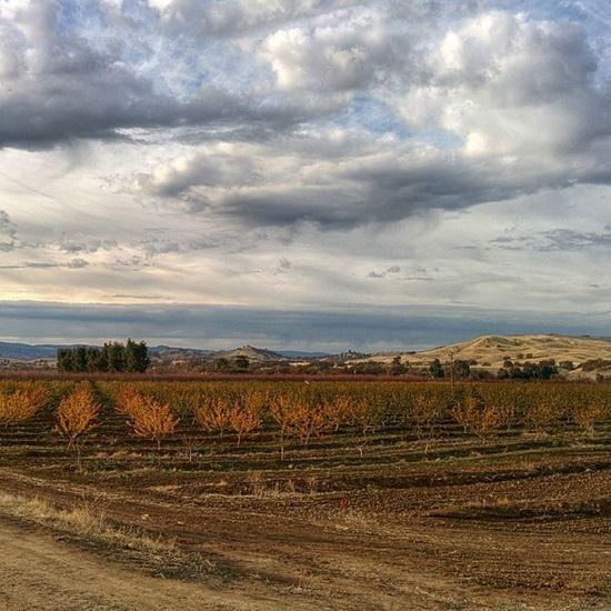 Farm Life...Capayca Orchard Plums Wintersca California AG Agriculture Ucdavis Rural