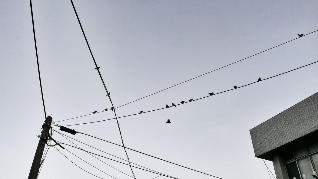 birds on wires Black & White Hanging Out Dim Light Relaxing