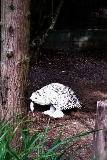 Owl Eating Zoo