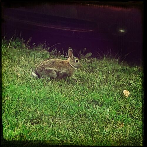 A bunny at my moms friends house.