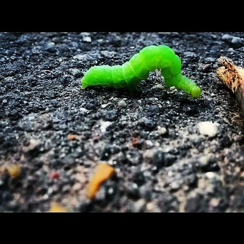 ? Caterpillar VSCO Vscocam Vsco_good vsconaturevscoxvscovscoeditvscoonlyanimalsinstasizeinstagood