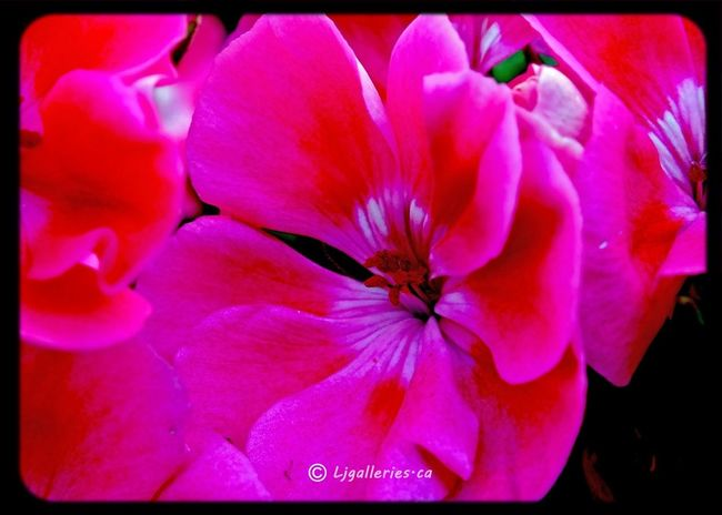 Eye4photography  Onlyflowers Flowers 25 Days Of Summer
