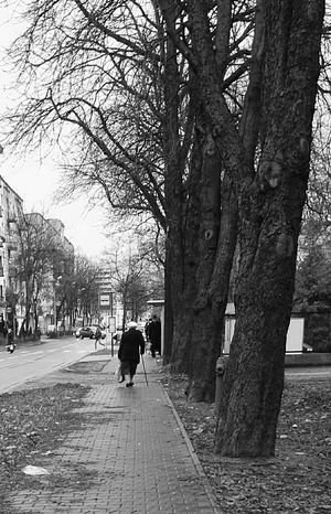 City Black & White B&w Streetphoto_bw Hello World From My Point Of View Outdoor Streetphotography City Life Streettrees Streetphotography In Poland Oneday