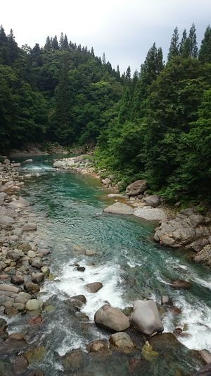 Green Color Green River Riverside River View Beauty In Nature Japan Photography Japan Tree Water Beach Rock - Object Forest Sky Landscape