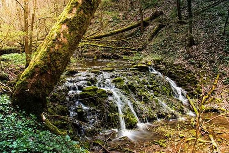 Forest Photography Waldspaziergang Wasserfälle Waterfall First Eyeem Photo Enjoy Germany Schwäbisch Hall The Places I've Been Today Enjoy Nature Traveling Enjoying The Sun Entspannung