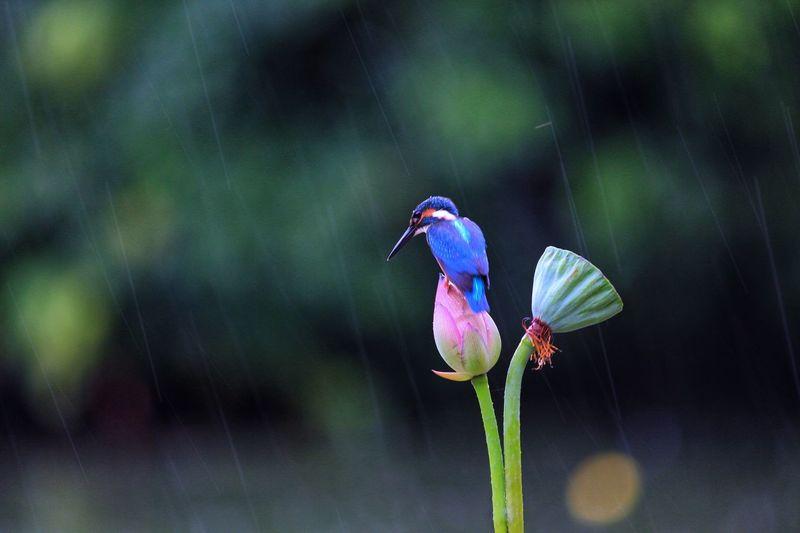 Close-up of bird perching on purple flower