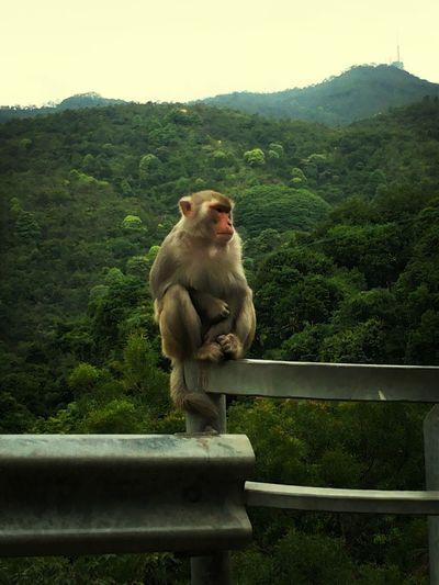. Monkey Selfie