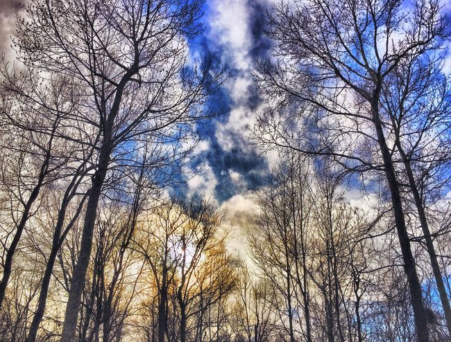 Sky And Clouds Clouds Glow Adventure Explorer Nature Outdoors Bare Bare Tree
