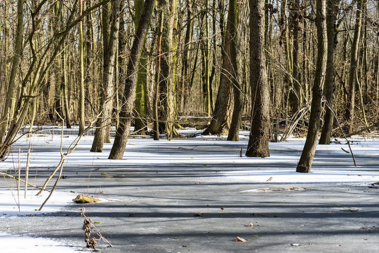 Winter forrest near Berlin Beauty In Nature Branch Cold Cold Temperature Day Frozen Landscape Nature No People Outdoors Scenics Snow Tranquil Scene Tranquility Tree Weather Winter