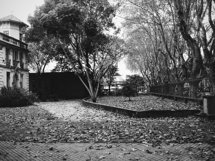 Landscape Focus Outside Natural Street Photo Vscocam Sombra Arboles , Naturaleza Camino Arboles Blanco Y Negro Blackandwhite Trees Land Scape Hojas Secas Hojas De Otoño