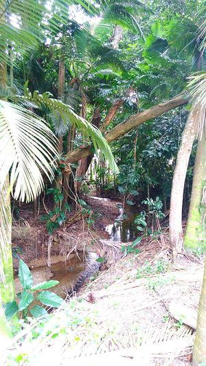 Natural Photography Tranquility Scenics Beauty In Nature No People Growth Water Reflection Outdoors, Outside, Open-air, Air, Fresh, Fresh Air, Natural Light Rainforest Australia