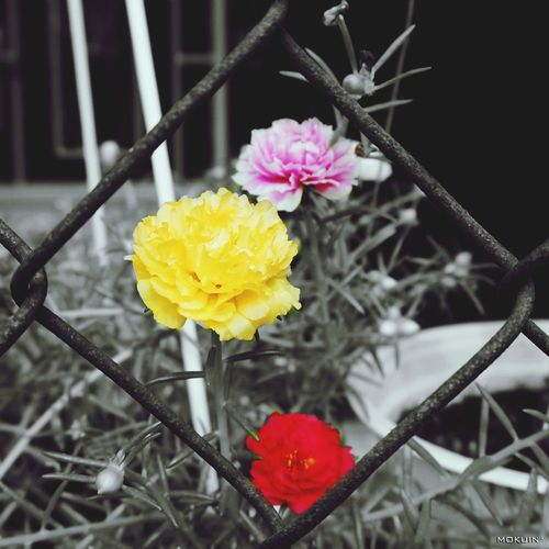 °°° Chuyện 03 người °°° Spring Flowers 10 Hours Effects Colorsplash Springtime Lunar New Year 5st Square