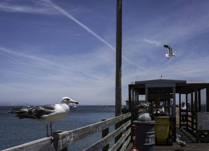 Birds on pier over sea against sky