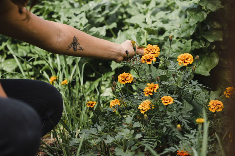 Cropped image of person hand by flowering plants on field