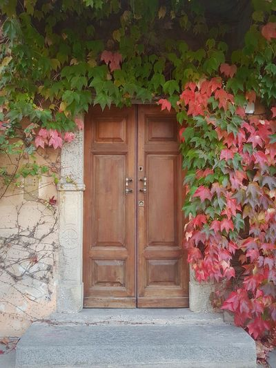 Ivy Covered Ivy Ivy Leaves On The Wall Old Door Langhe Autumn Autumn Colors Autumn Leaves Door Closed Entrance Wood - Material Safety Outdoors Doorway No People Day Old-fashioned Architecture Entry Plant Building Exterior Nature Close-up