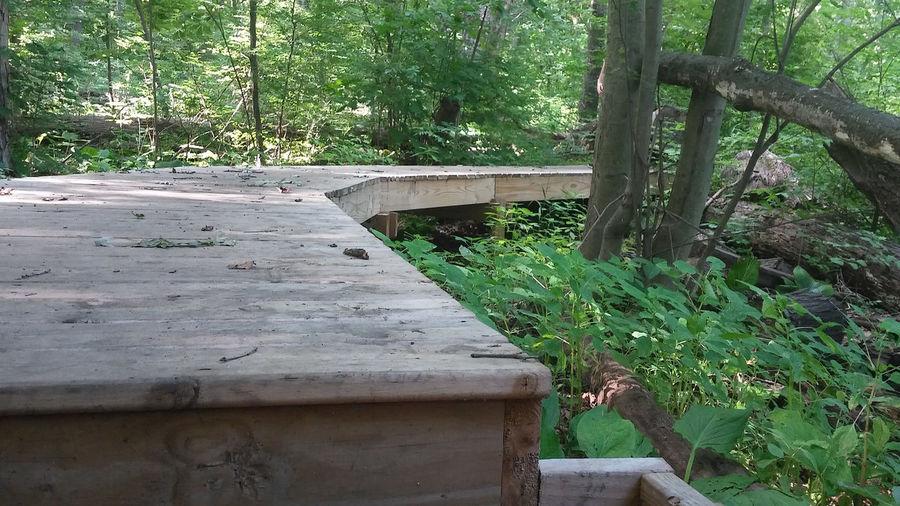 Walkway Walk This Way Walkway, Rail, Railing, Wood, Plank, Boards, Logs, Trail, Track Walkway To Nature Walkway, Trail, Track, Hike, Walkway By The River Jackson Michigan