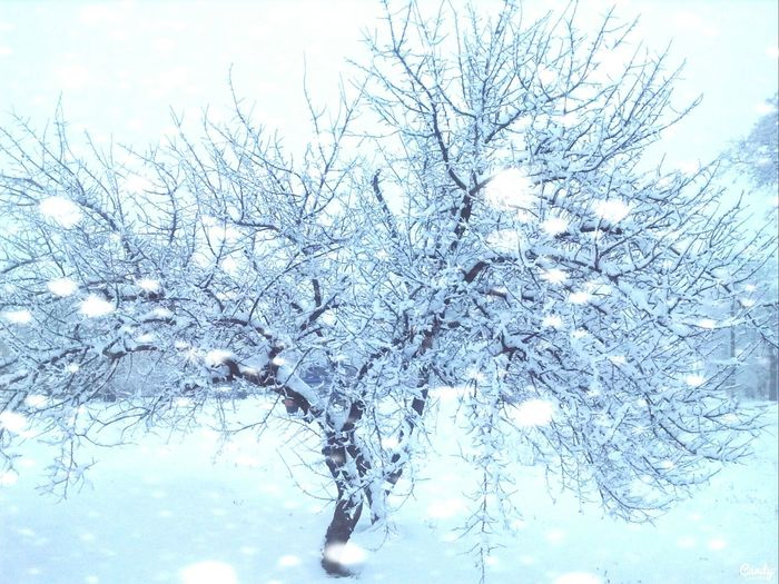 Snowing ❄ WHiTE WORLD