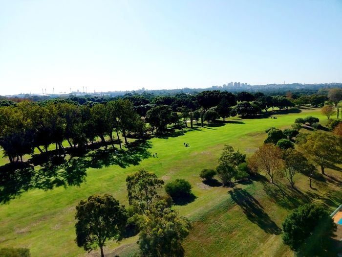 City Golf Sports Green Clear Sky Relaxing Entertaining Tree Trees Trees And Sky Sydney Sydney, Australia Sydney Golf Tree Golf Course Golf Sky Landscape Grass Green Color Growing