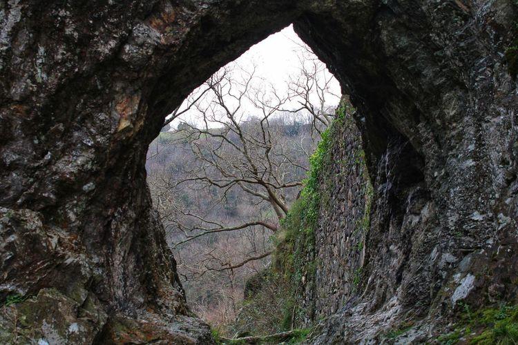 View of tree trunk through rocks