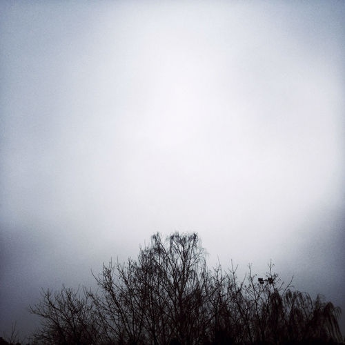 Dark trees in the fog. Beauty In Nature Copy Space Fog Nature No People Outdoors Sky Tranquility Tree Winter