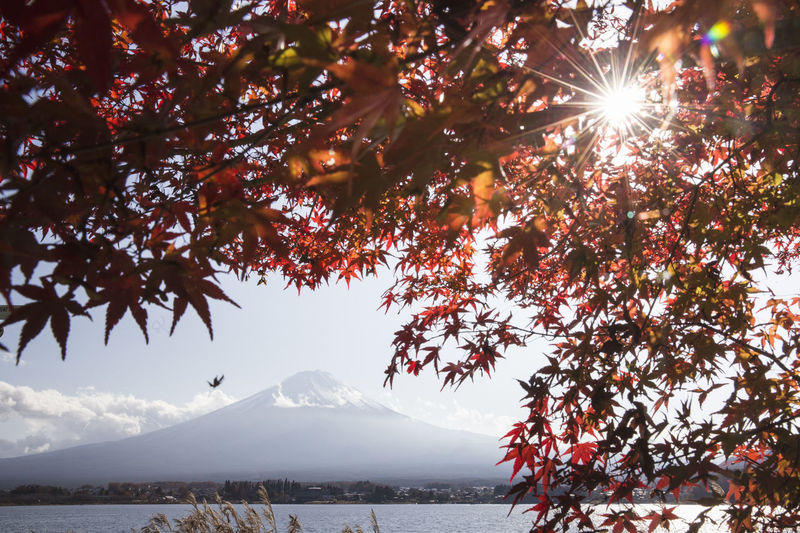 Autumn Autumn Colors Autumn Leaves Japan Japanese  Mount FuJi Mount Fuji Views In The Distance Beauty In Nature Day Mountain Nature No People Outdoors Scenics Seasons Sky Snow Sunlight Tranquil Scene Tranquility Tree Water