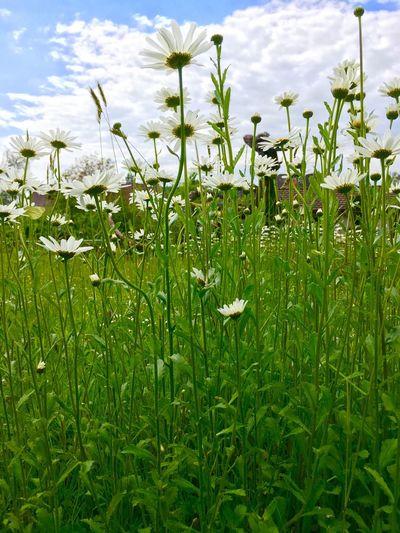 Newtalent EyeEm Masterclass Blumenstrauß EyeEm Best Shots Nature_collection Blumen Blumen *~* EyeEm Best Shots - Nature Blumenpracht🌺🍃 Naturelover Nature Photography Naturelovers Natur Nature Nature_ Collection