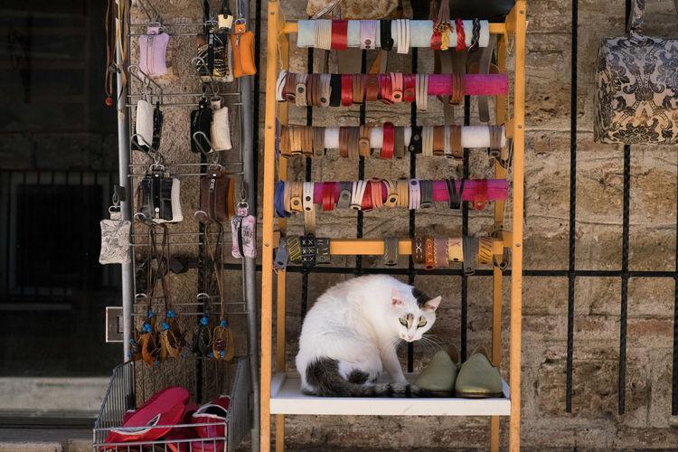 Cat sitting on shelf at market