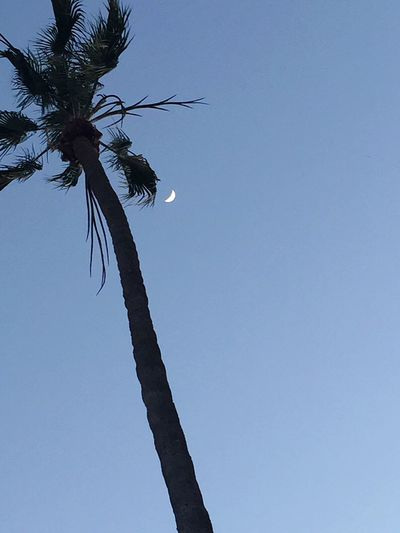 Palm Tree And