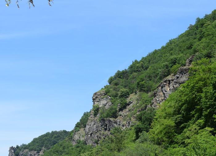 Tree On Mountain Against Sky