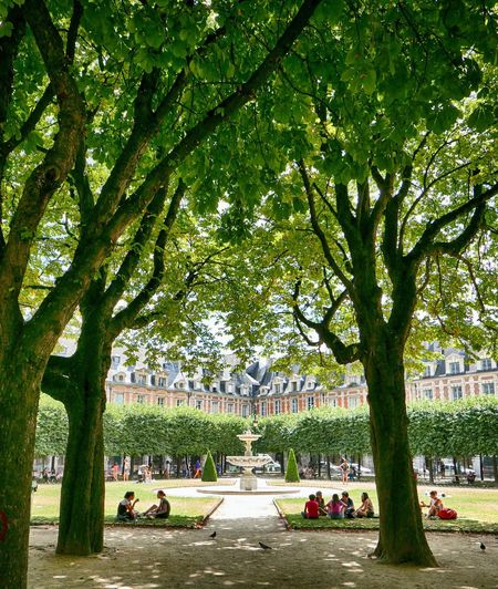 Paris ut City Life Urban Lifestyle Tree Plant Nature Tree Plant Nature Built Structure Group Of People Outdoors